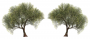 products:tree.png